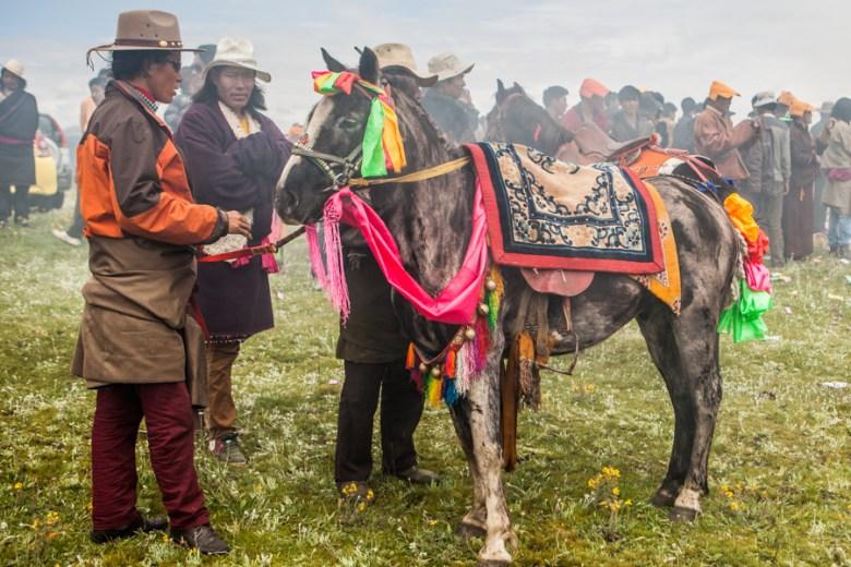 1 festival horse