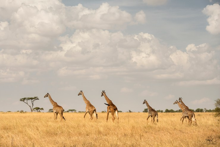 Jacqueline_M_Koh_ResourceTravel_Serengeti