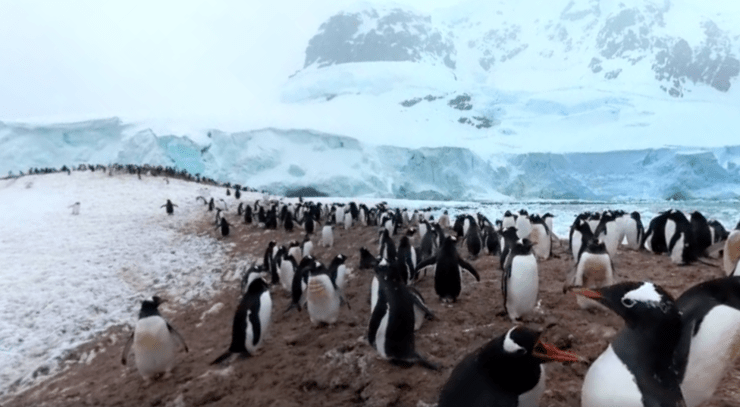 National Geographic 360 video Antarctica Cover