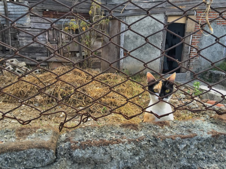 A cat looks up from behind a fence in Holguin.