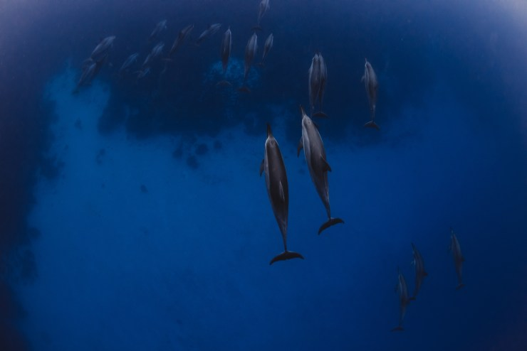 Hawaii_Dolphins-6