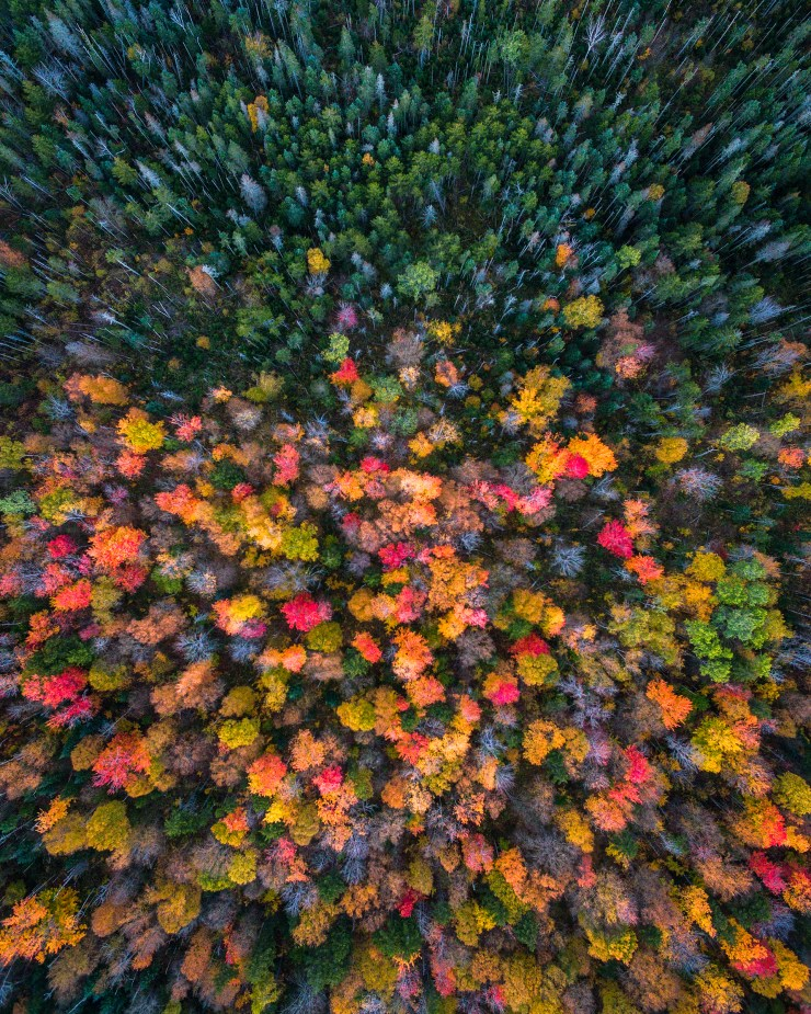 new-hampshire-drone-fall-colors-and-evergreens-by-michael-matti