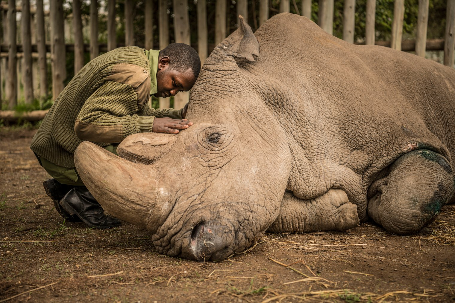 A Conversation with Ami Vitale About Rhino Conservation and How You Can Win a Trip to Kenya