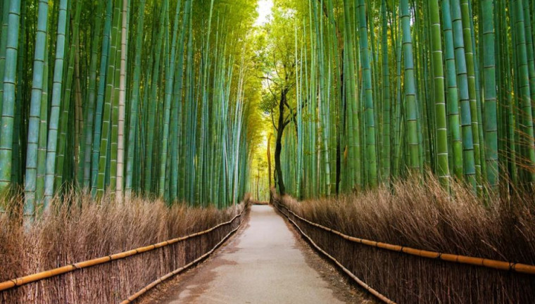 Wallpaper Hutan 3d 10 Best Places To Visit In Japan Travel Tips Trythis