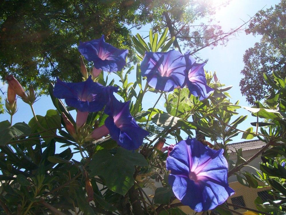 Faro, Portugal, Botanical Gardens Photos (6/6)