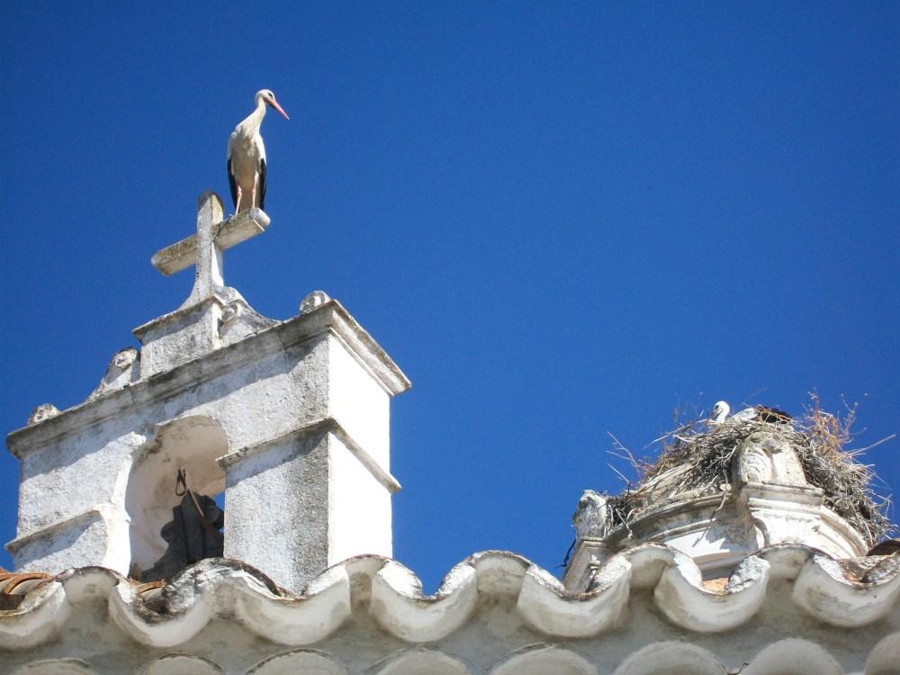 Storks of Faro, Portugal Photos (3/6)
