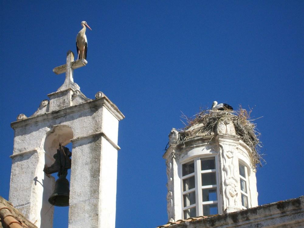 Storks of Faro, Portugal Photos (4/6)
