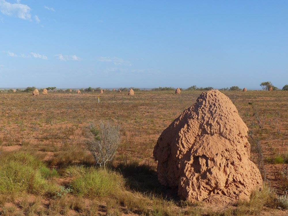 Australia Termite Mounds In Exmouth Travel2unlimited