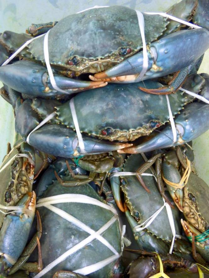 Blue Crab Parts - Best Crab For Food 2018