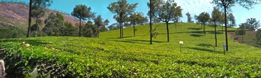 A Glimpse of Tea Plantations in Munnar