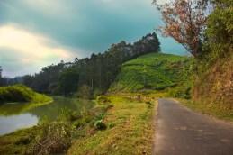 Munnar Tea Plantations 2 (1)