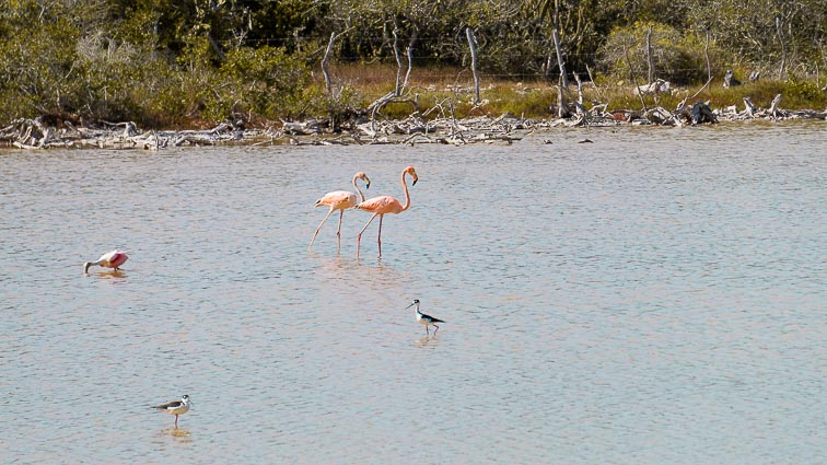 Flamingos, Las Coloradas, Mexico
