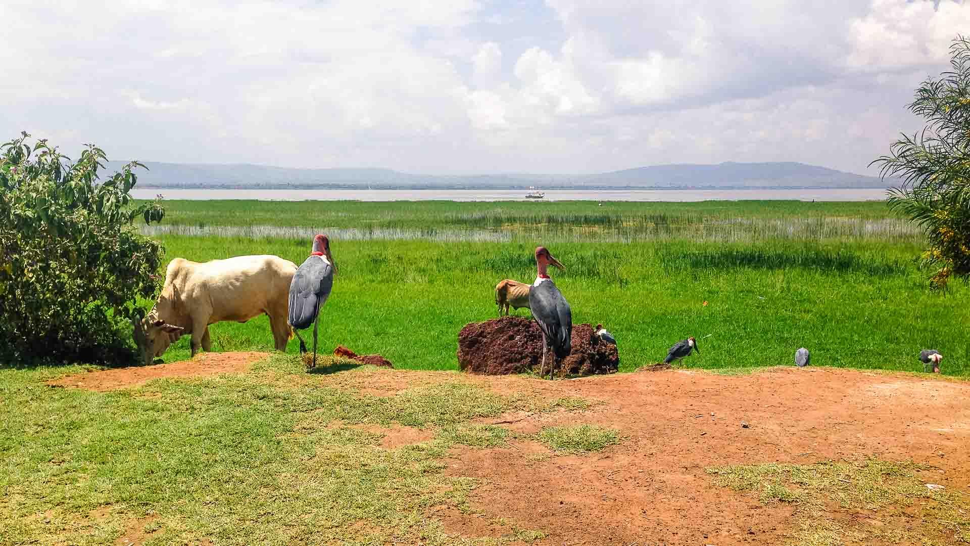Hawassa, Ethiopia