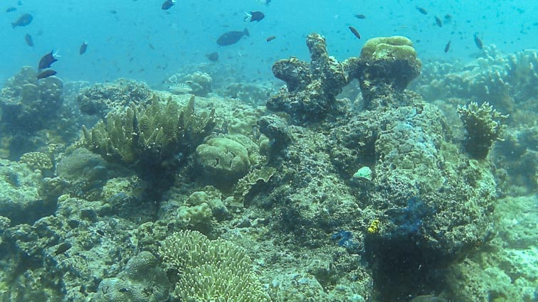 Fish and corals on Sipadan