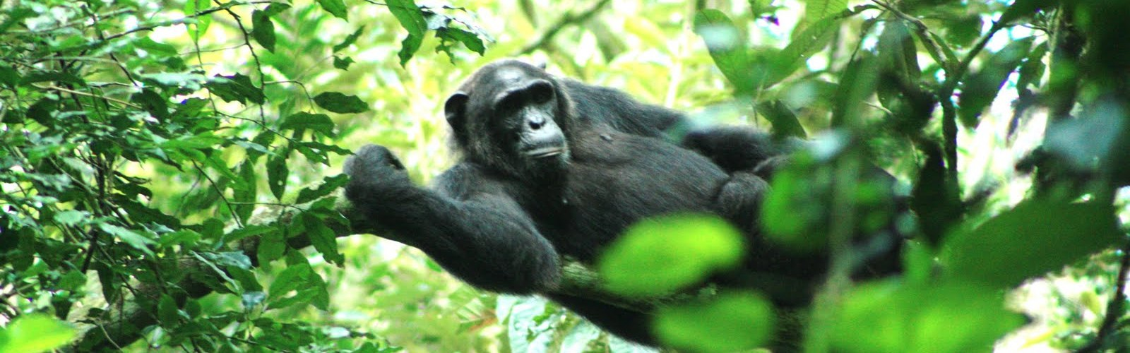 KIBALE FOREST N.P.