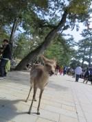 Deer in the path