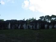 Monkeys on ruins