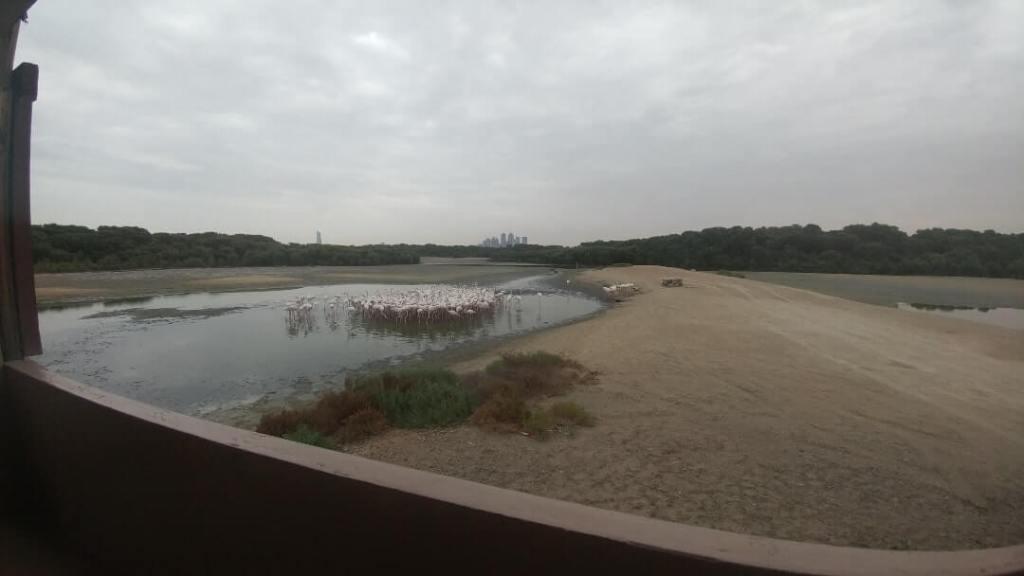 Ras Al Khor, protected habbitat, flamingos