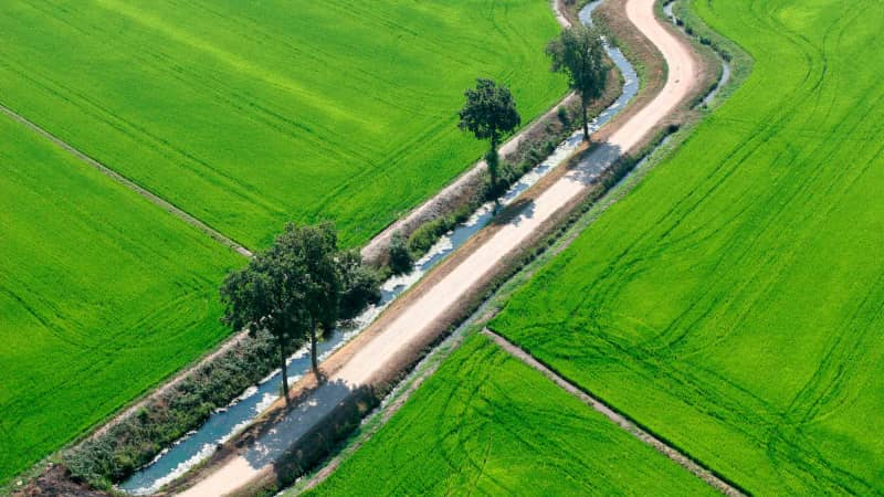 Italy's rice belt follows the River Po across the north of the country, from Piedmont to Veneto.