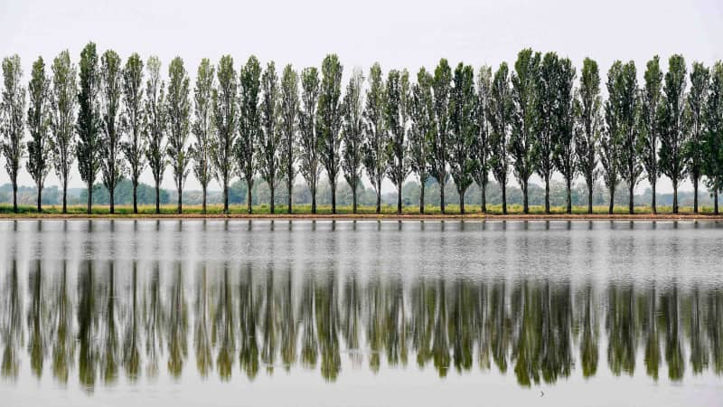 The rice fields line the area around the River Po, known for its cypress trees.