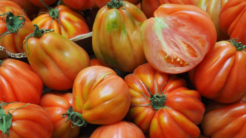 Few countries now are as obsessed with tomatoes as Italy.