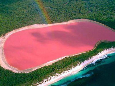 why pink lakes in Australia are pink