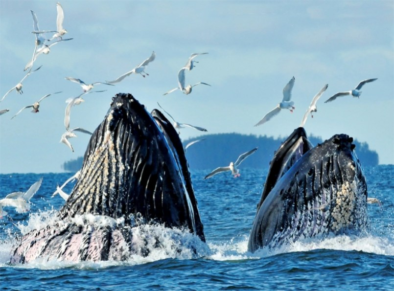 Best Places for Humpback Whales Watching in the World