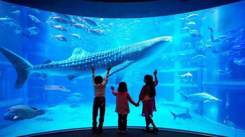 Visit the world's largest aquarium Osaka Aquarium Kariyukan