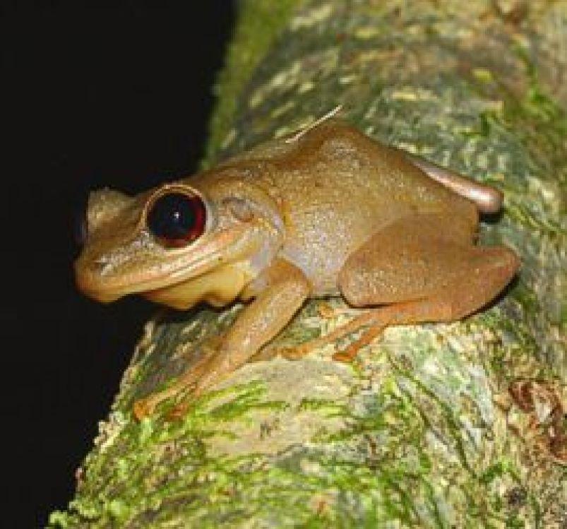Explore wildlife in El Yunque