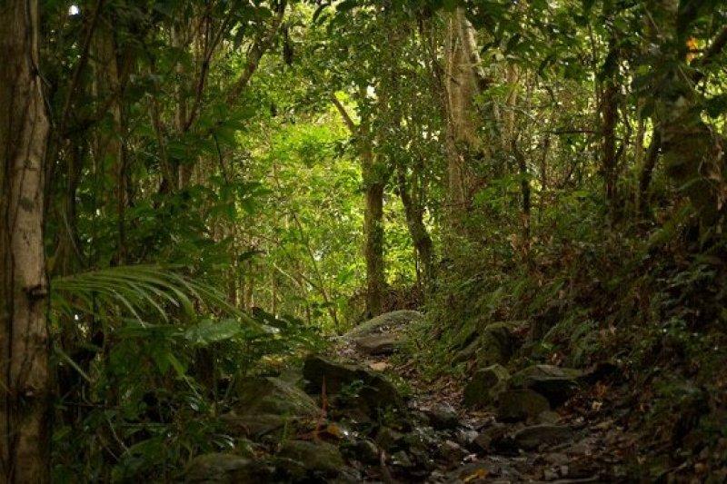 Sage Mountain National Park Tortola