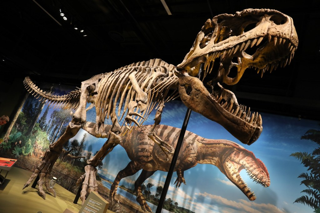 Things to do in Denver Museum of Nature and Science