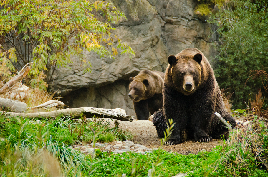 Visit Woodland Park Zoo Seattle Washington