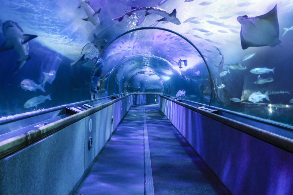 Visit the Aquarium of the Bay in San Fransisco, California