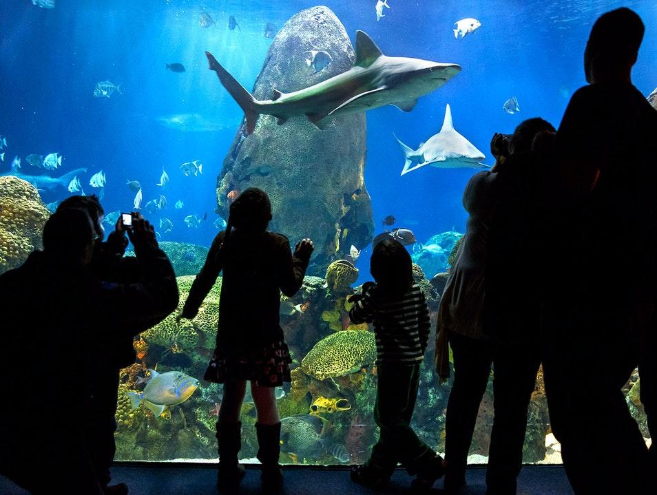 Tennessee Aquarium in Chattanooga