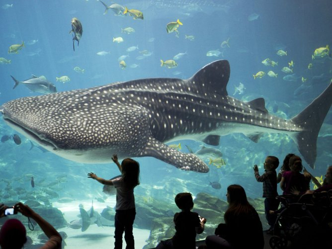 Things to Do in Georgia Georgia Aquarium