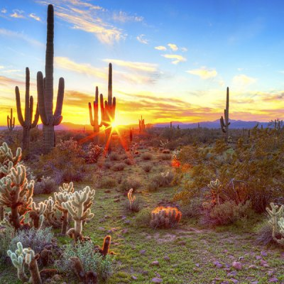 50 Best Things to Do in Scottsdale, Arizona