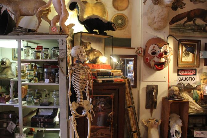 Woolly Mammoth Antiques and Oddities in Chicago