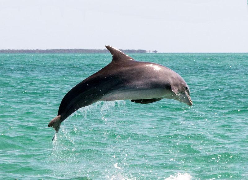 Wild About Dolphins Tour Key West