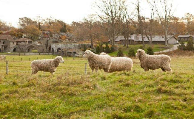 The Surprise Valley Farm Newport RI