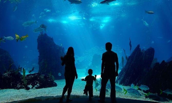 Waikīkī Aquarium in Honolulu