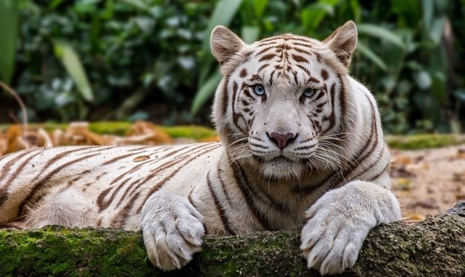 Things to Do in Singapore Singapore Zoo