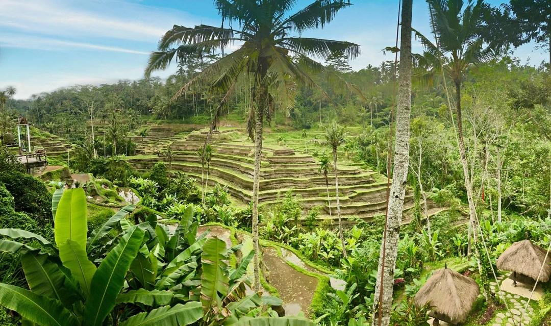 Telang Galang rijstterrassen op Bali