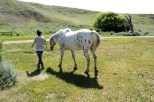Me and Gus the Appaloosa
