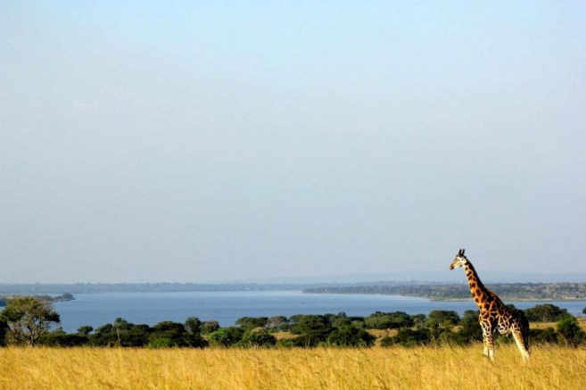 giraffe overlooking nile