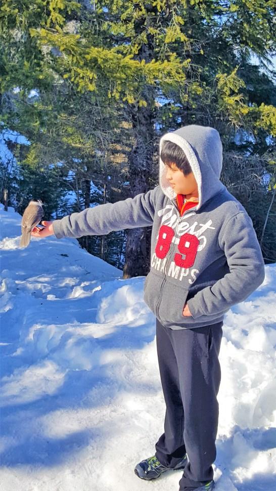 """Bird """"Robber Jay"""" sitting on hand at Rattlesnake Ledge summit.  Snow Hiking to Rattlesnake Ledge"""