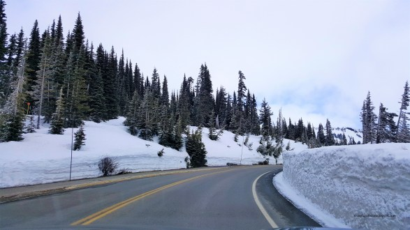 Roads leading to Paradise valley at Mount Rainier National Park in Spring.