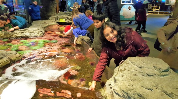 Touching Sea Life in Tide Pool at Seattle Aquarium