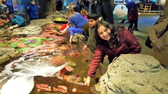 Touching Sea Life in Tide Pool at Seattle Aquarium
