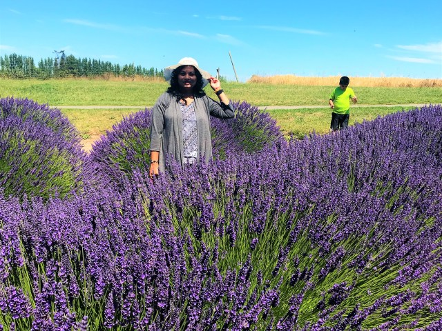 Strolling in Lavender Farms at Sequim Washington , Sequim Lavender festival