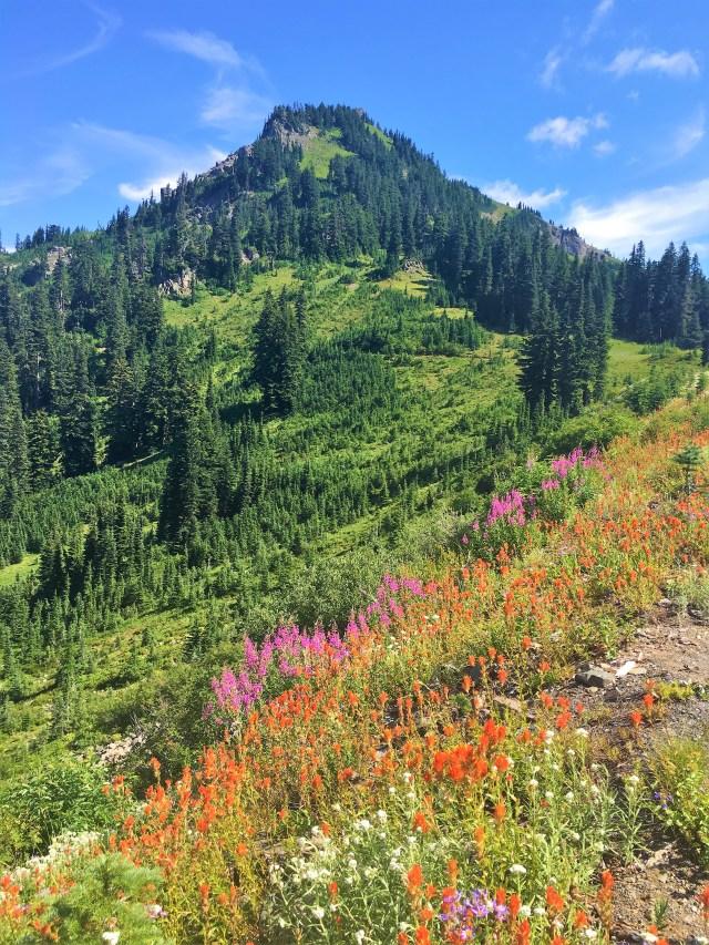 Colorful Wildflowers on Naches Peak loop trail